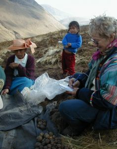 Peruvian biologist María Scurrah learning the names of traditional potato varieties from a farmer in Quilcas, Junín Department, Peru. Credit: Jonathan Miller