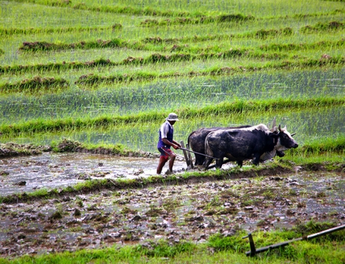 Culturally Rich Agroecosystems: Maintaining Traditional Beliefs for Food Security in Nepal