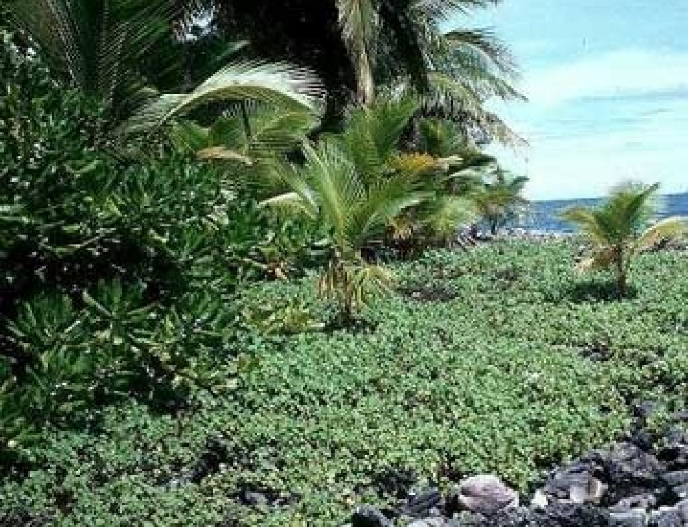 Reconnecting with Natural and Cultural Heritage: Flora and Fauna of the Marshall Islands