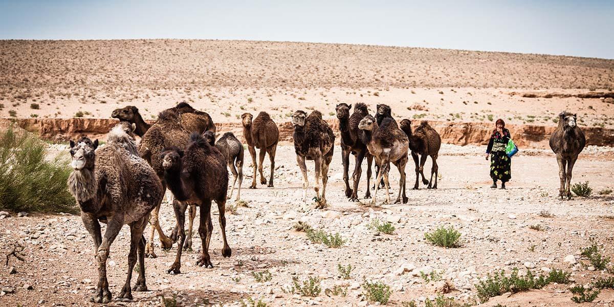 women pastoralists
